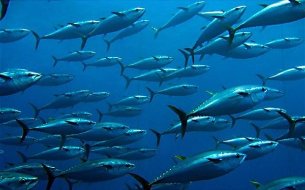 17.9.2015_Ο πληθυσμός των θαλασσίων ειδών μειώθηκε κατά 50