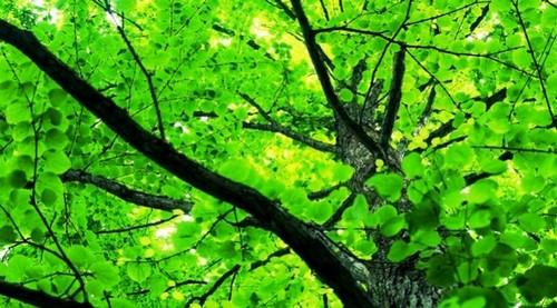 26.9.2015_Τα δέντρα λένε «ως εδώ» με την Κλιματική Αλλαγή