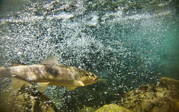 12.10.2015_Τα ψάρια είναι οι μεγαλύτεροι αθλητές του πλανήτη