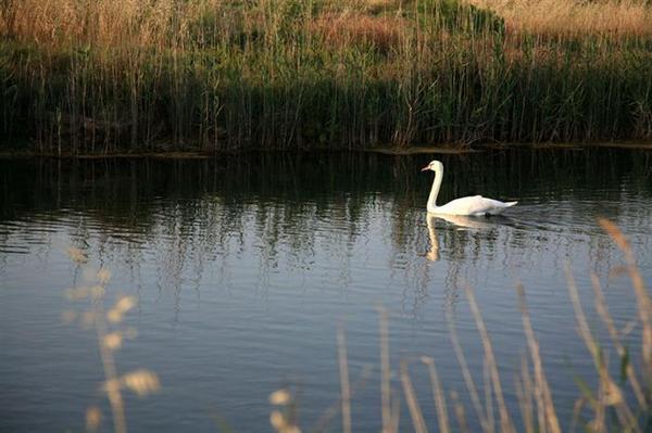 6.3.2016_Λίμνη του Μουστού