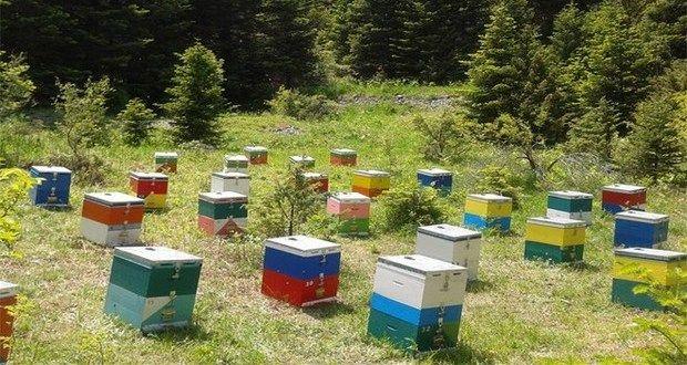 9.7.2016_Εξιχνιάστηκαν επτά περιπτώσεις κλοπών κυψελών μελισσών στη Λακωνία