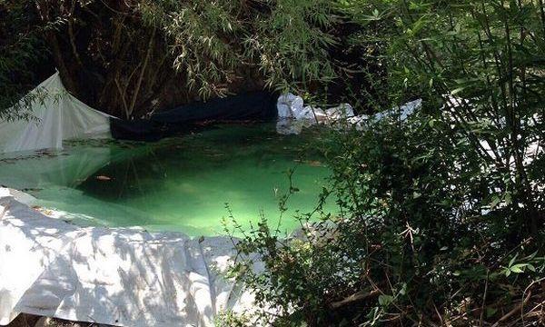 10.8.2016_Εντοπίστηκε ακόμη μία μεγάλη φυτεία δενδρυλλίων κάνναβης στη Λακωνία_2